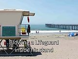 Sucking Str8 Lifeguard