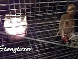 Cage Doll Sex